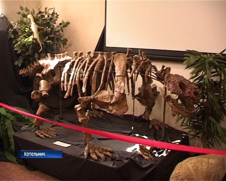 Котельничский палеонтологический музей переезжает