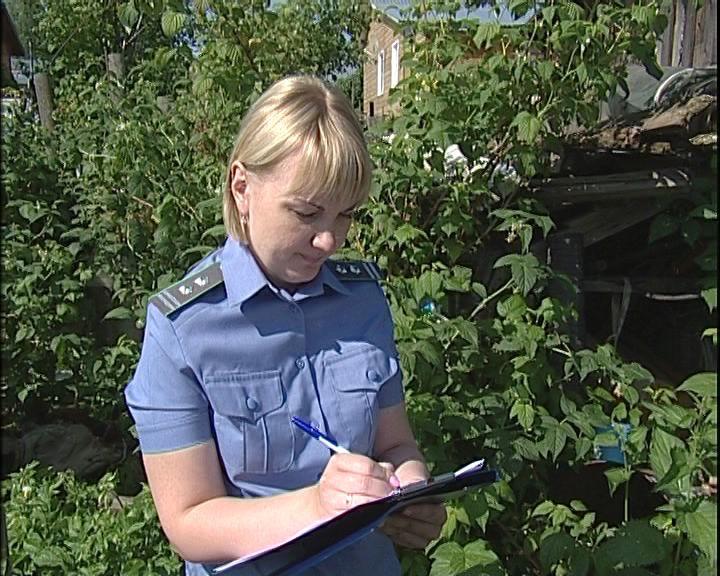 Урожаю кировских садоводов угрожает золотистая картофельная нематода