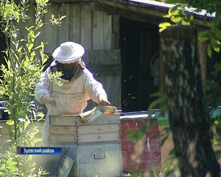 Кировские пчеловоды этим летом рискуют остаться без урожая
