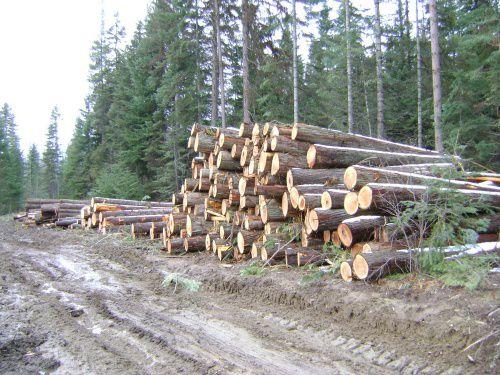 Дело экс-гендиректора ООО Шабалинский деревообрабатывающий завод направлено в суд