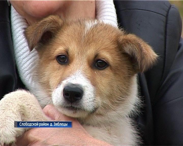 Приют для собак в Слободском