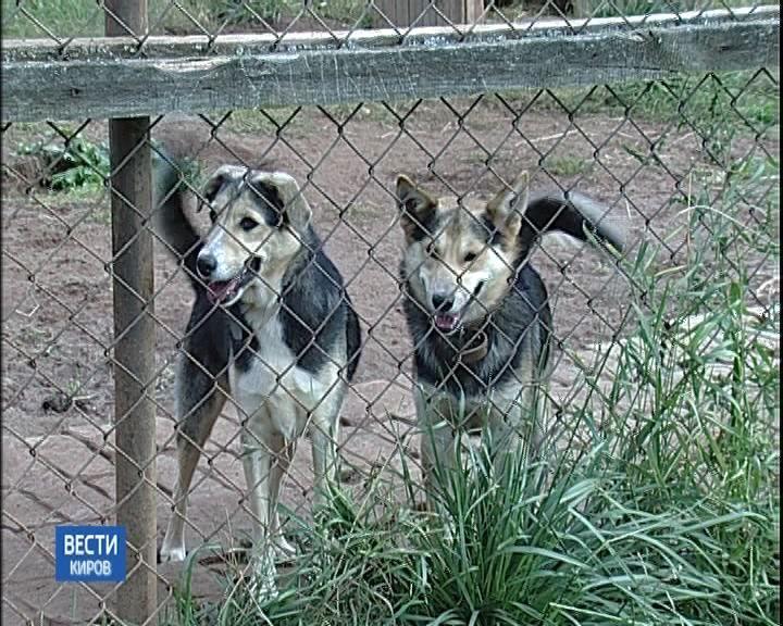 В Кирове открылся новый приют для бездомных собак