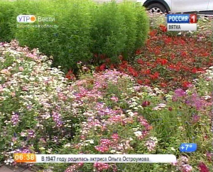 Озеленение города Кирова