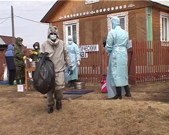 11 областях Украинского государства введен карантин из-за чумы свиней