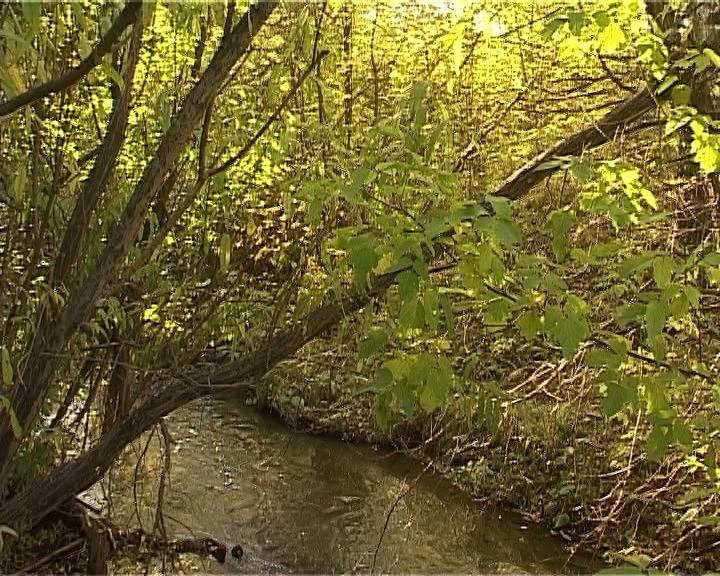 Загрязнение нефтепродуктами водоохранной зоны реки Мостовицы