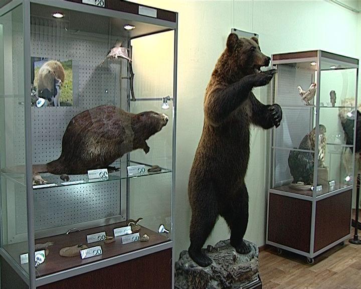 Выставка «Гиганты и карлики» в кировском зоологическом музее