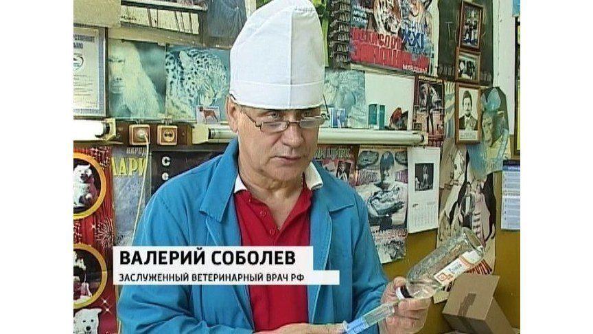 Скончался известный ветеринарный врач Валерий Соболев.