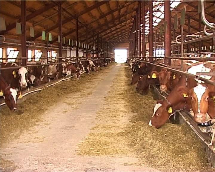 О заготовке кормов и зимовке скота