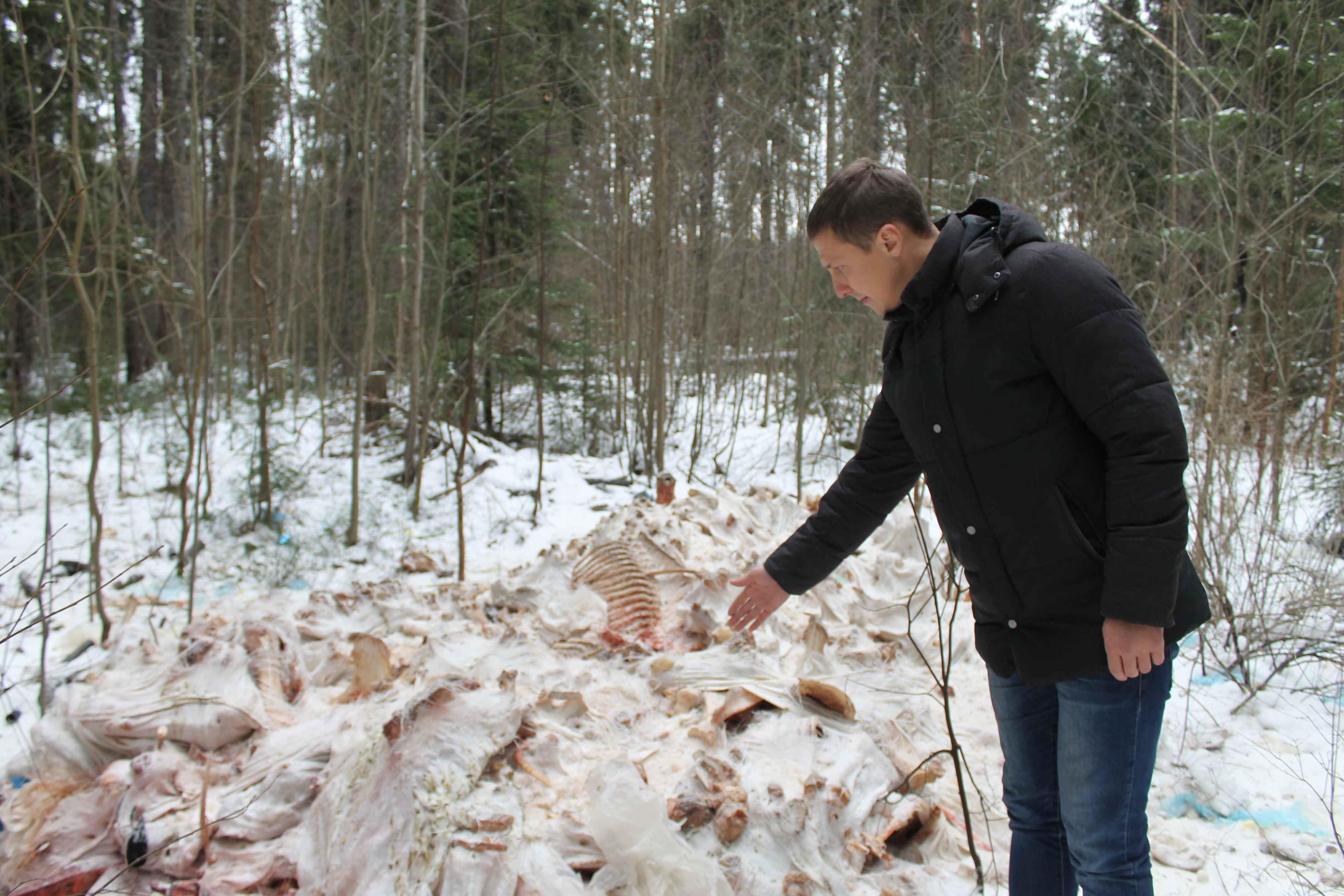 В Кирове найдена 5-ая свалка с останками животных