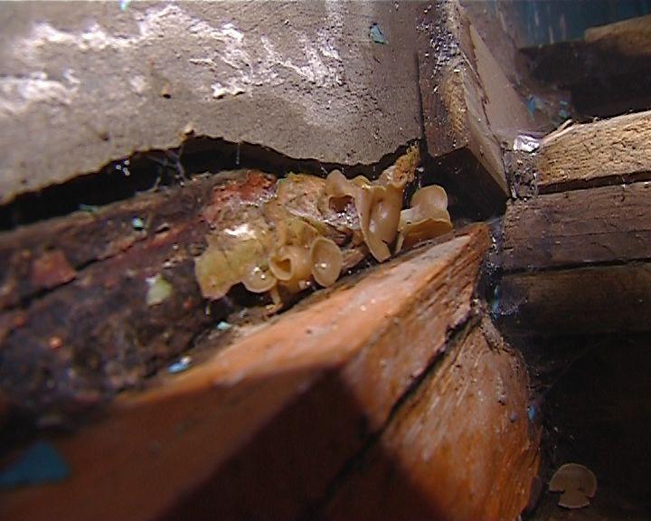Жители дома на Левитана обнаружили в подъезде колонию поганок
