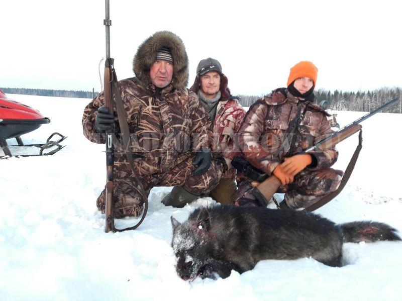 В Немском районе охотники добыли волка редкого окраса.
