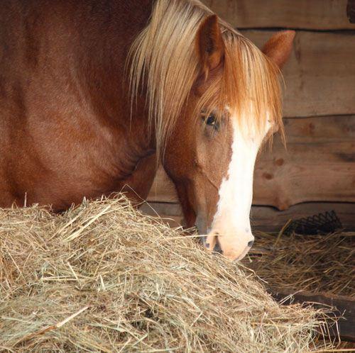 В Порошино арендатора конюшни оштрафовали за ущерб, нанесенный лесному фонду.