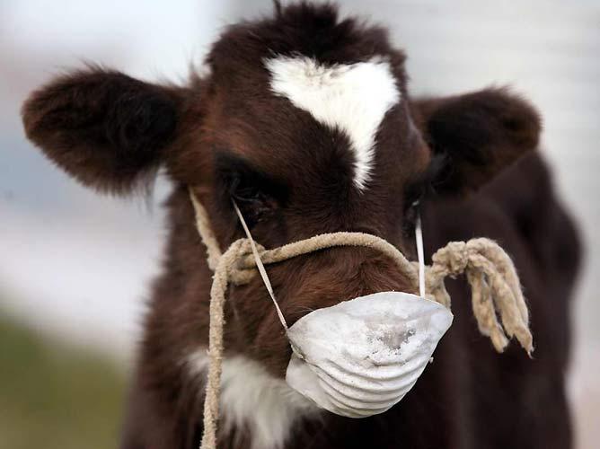 В Кировской области выявили два новых случая бешенства животных.