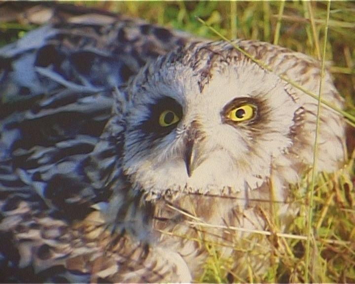 Птицы заповедника «Нургуш» на фотовыставке в библиотеке № 3