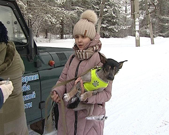 В Кирове продолжается добровольная вакцинация домашних животных от бешенства