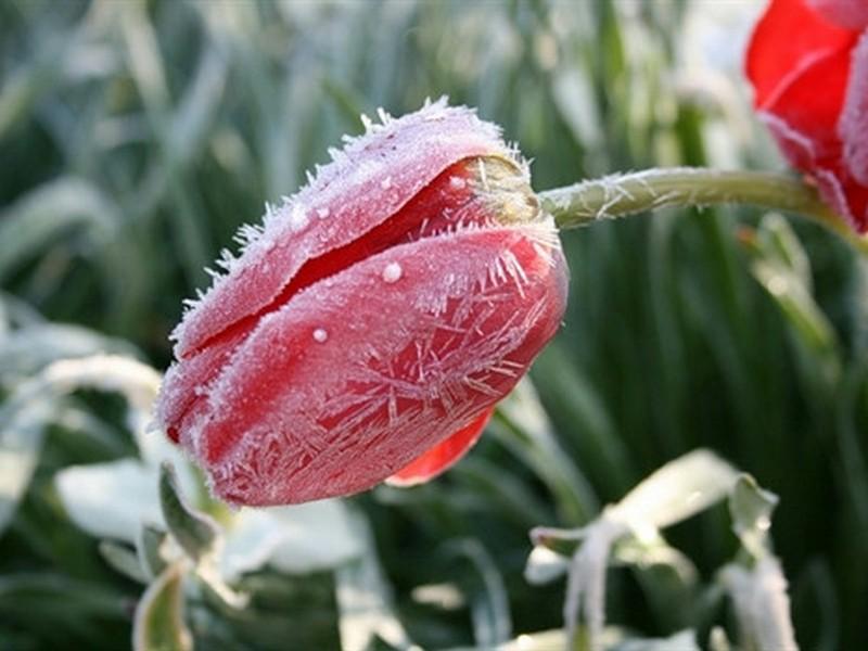 В Кировской области ожидаются заморозки.