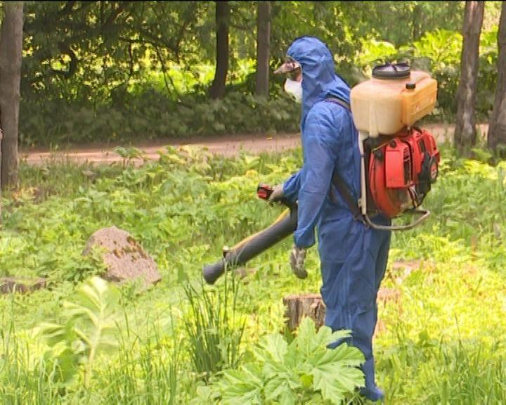 В Чистых прудах начали применять новый метод борьбы с борщевиком