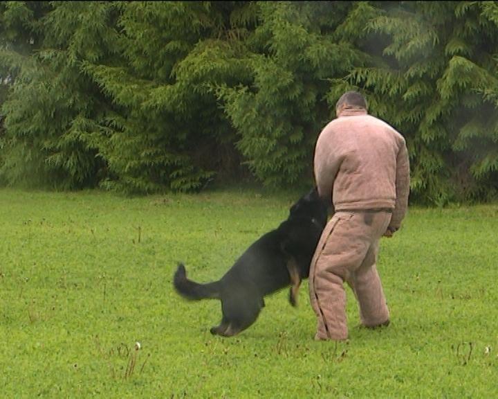 Как собаки встают на охрану общественного порядка