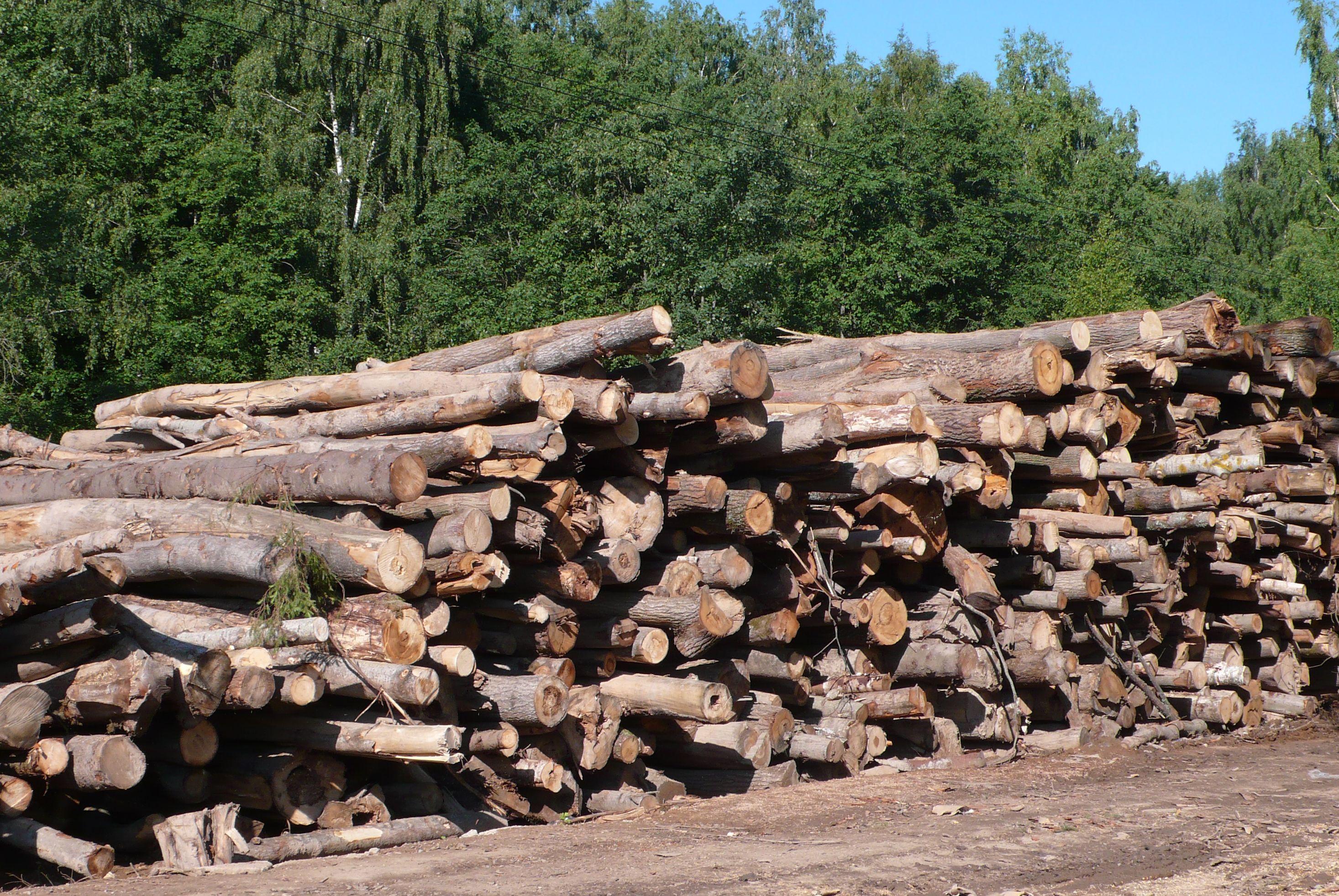 В Опаринском районе выявили незаконные вырубки леса на 6 млн. рублей.