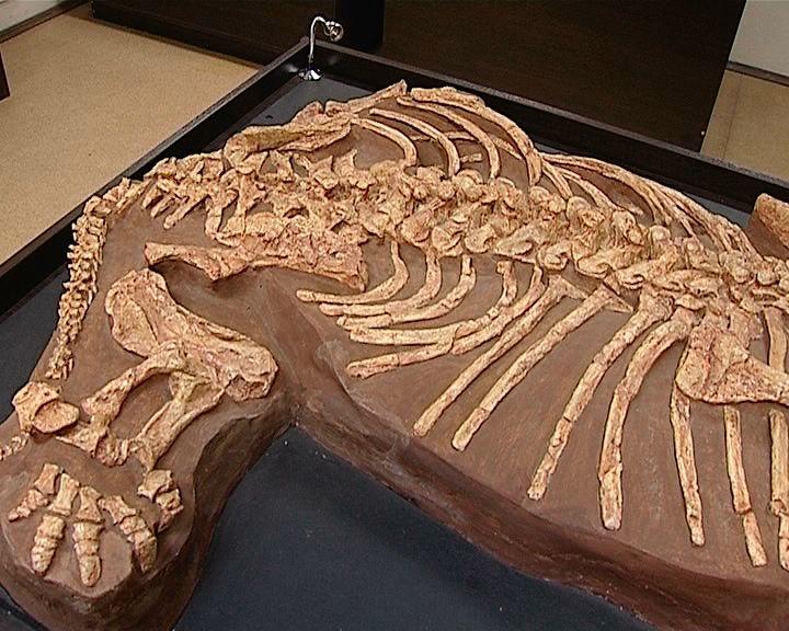 Котельничские палеонтологи работают с новой уникальной находкой
