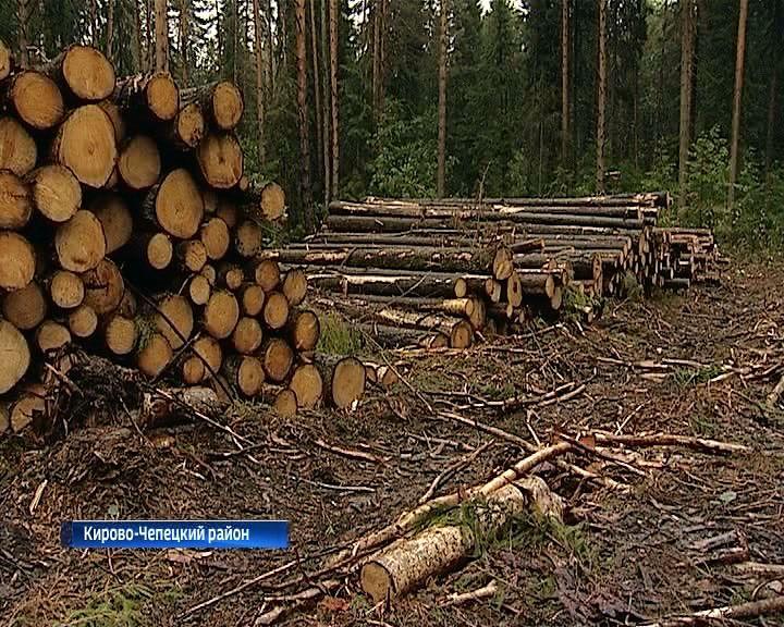 В Кирово-Чепецком районе садоводы обеспокоены вырубкой леса