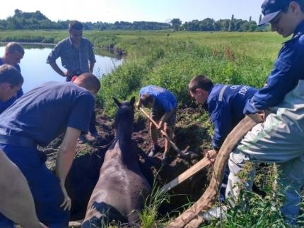 В Кирово-Чепецком районе пожарные спасли лошадь.