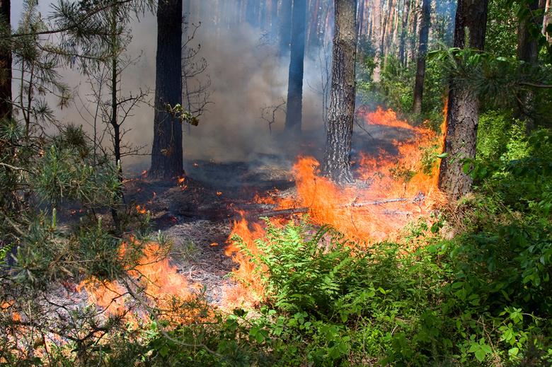 В Кировской области с начала сезона ликвидировали 22 лесных пожара.