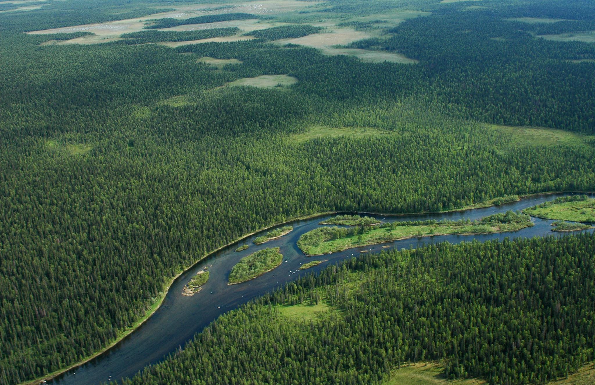 В Кировской области на общественное обсуждение представлен Лесной план.