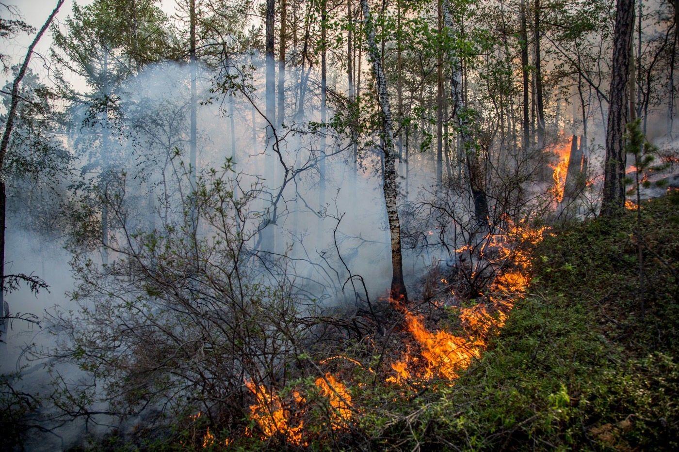 В Кировской области обнаружили три лесных пожара.