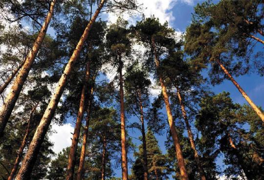 Политика Кировской области в сфере освоения лесов повлияла на повышение доходов бюджета.