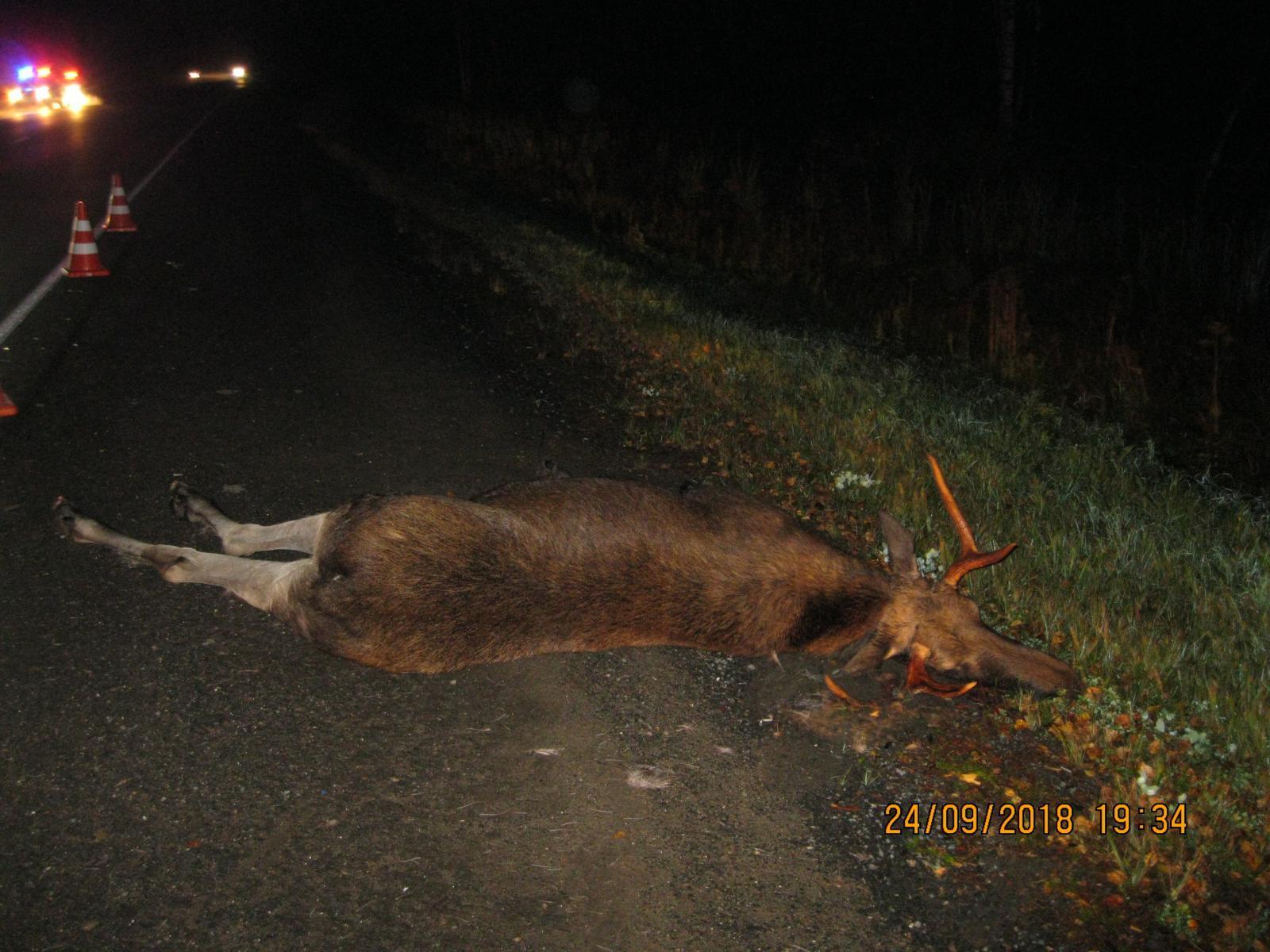 В пригороде Кирова ВАЗ-2115 врезался в лося.
