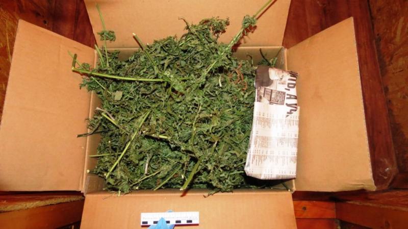 У жителя Кильмезского района полиция изъяла 7,5 килограммов конопли.