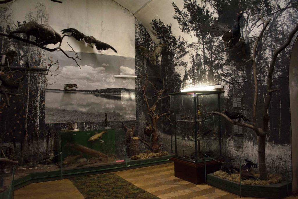 Краеведческий музей г. Советска участвует во всероссийском конкурсе