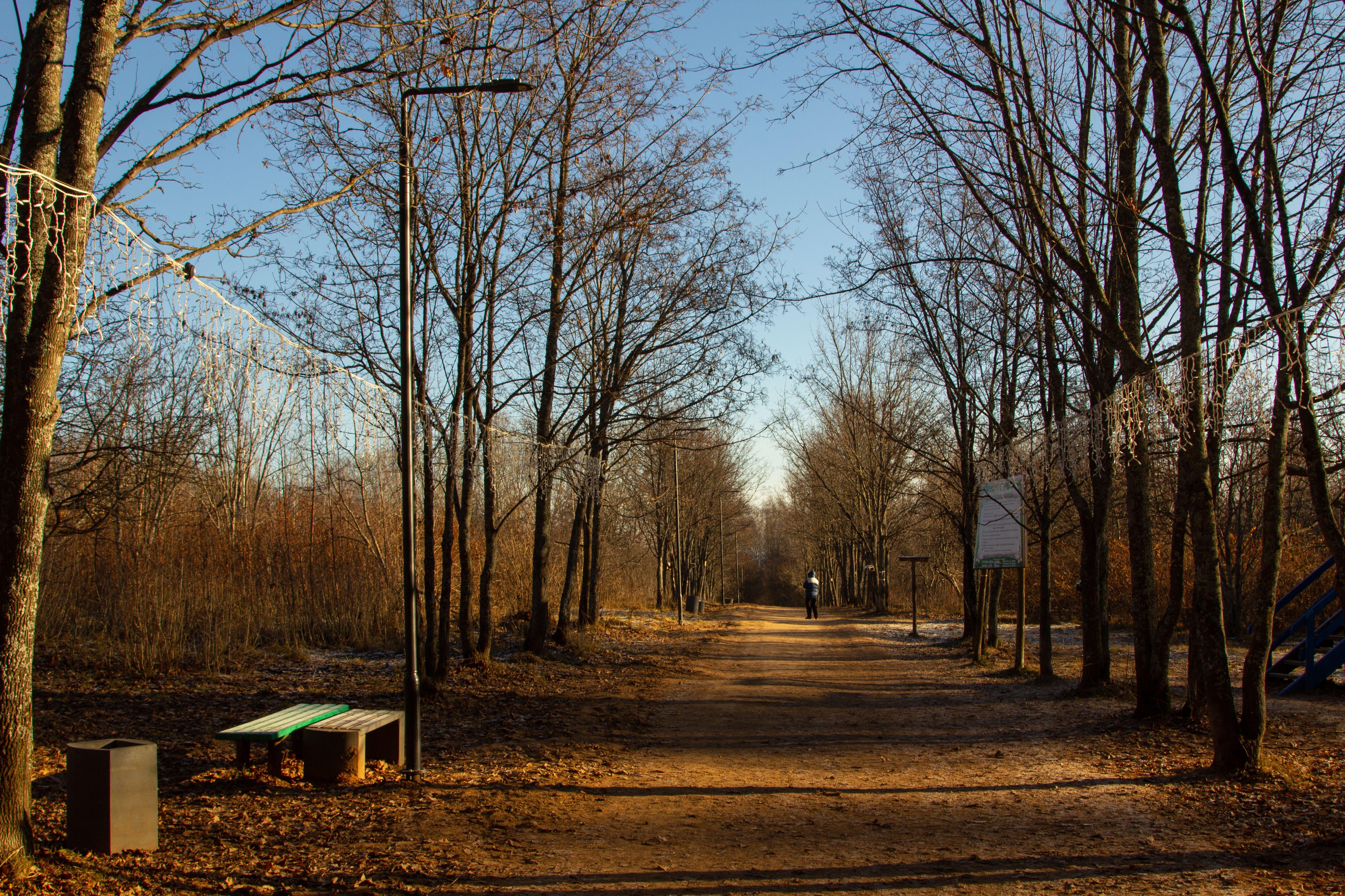 Благоустройство кировского Дендропарка планируется завершить к весне 2019 года.
