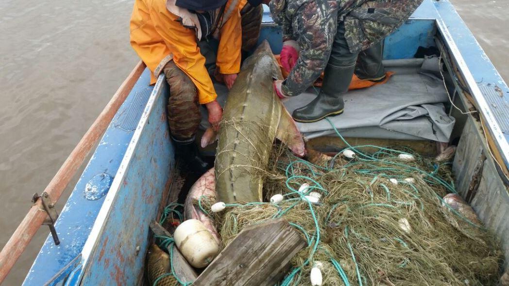 В России увеличили штрафы за незаконный вылов рыбы.