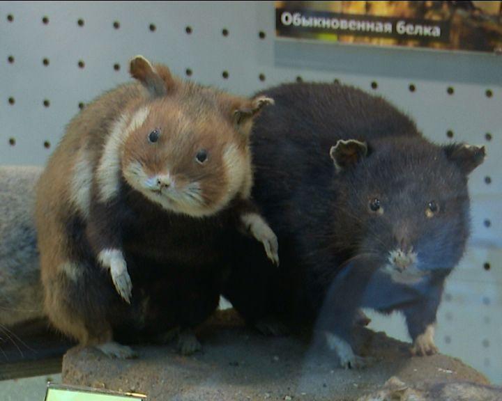 Фотографии животных и насекомых украсили стены Кировского зоологического музея