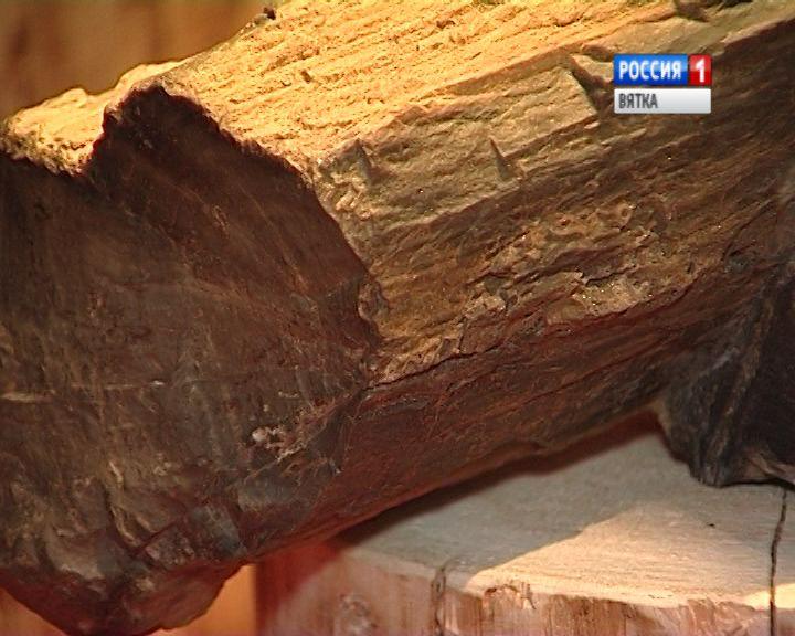 Коллекция Вятского палеонтологического музея пополнилась новым экспонатом