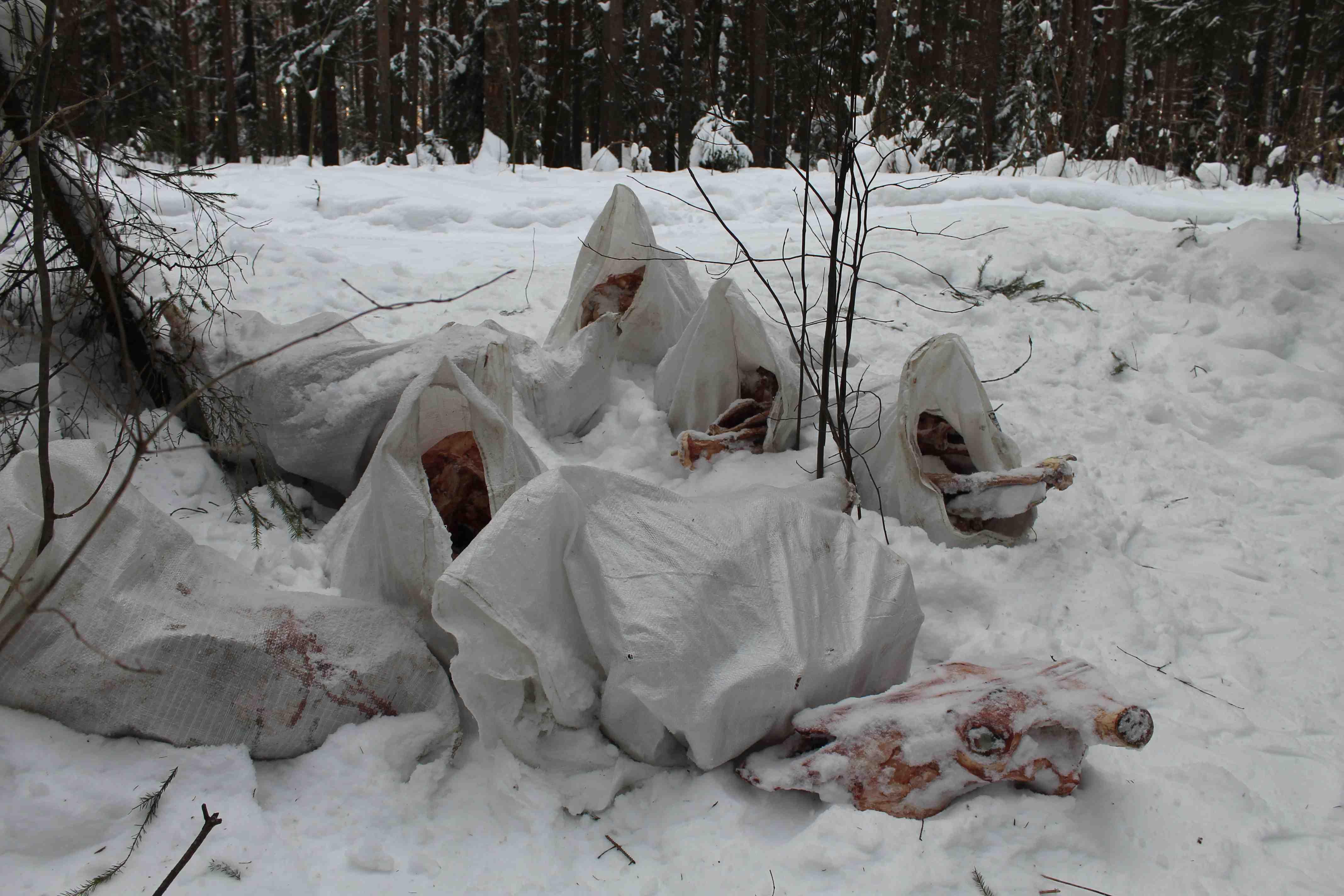 В пригороде Кирова обнаружили очередную свалку с останками животных.