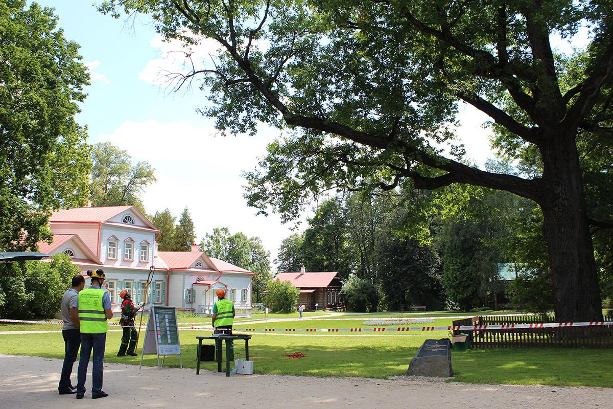 Кировчанам предлагают проголосовать за европейское дерево года.
