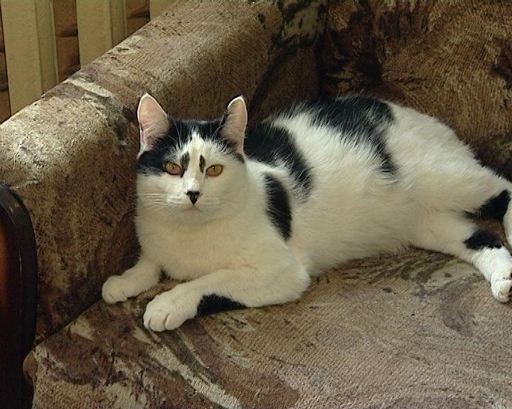 Кировчане отметили Всемирный день кошек