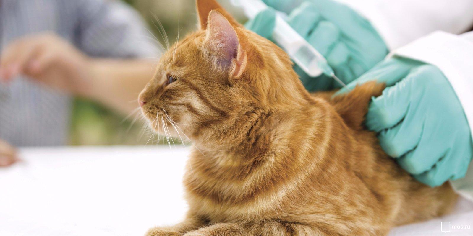 вакцинация домашних животных фото