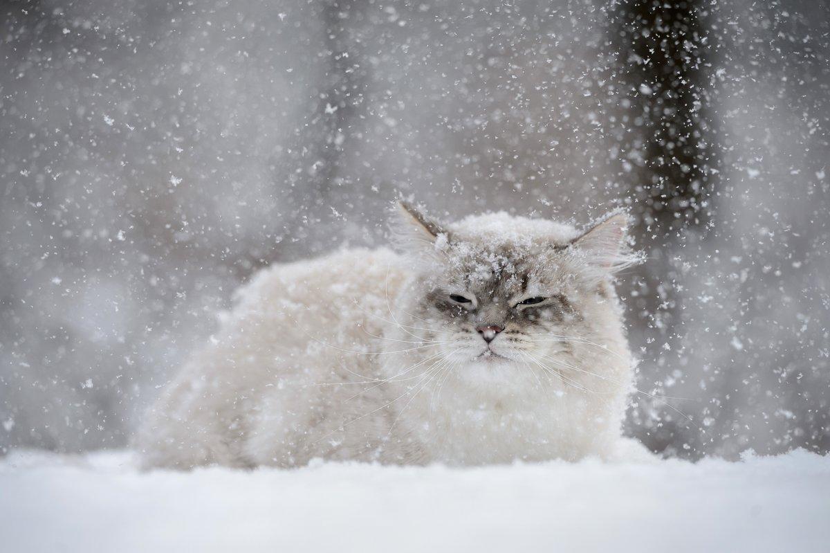 МЧС: в Кировской области на 8 марта объявлено метеопредупреждение.
