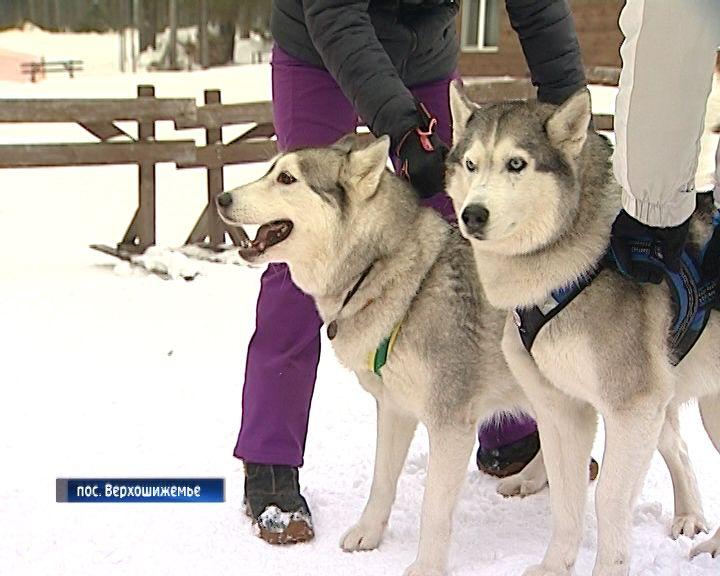 В Верхошижемье прошли зимние гонки на собачьих упряжках