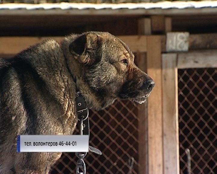 Собаки ищут дом и любящих хозяев