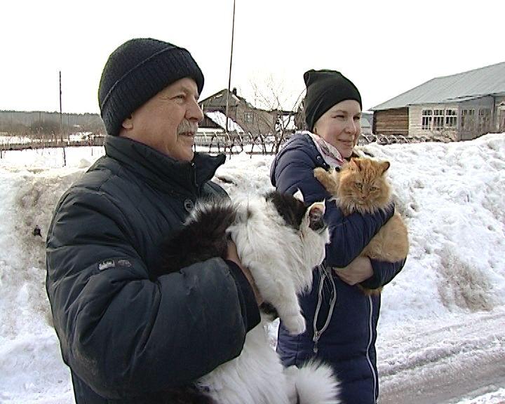 В Кирове и области началась выездная вакцинация животных против бешенства