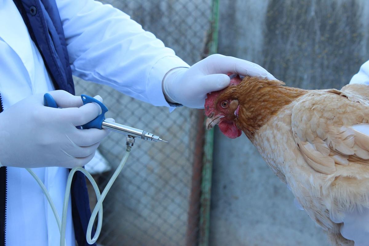 В Кировскую область завезли продукцию с геномом вируса птичьего гриппа.