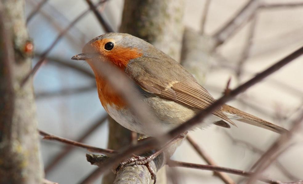 В Кировской области ожидается вторая волна миграций перелетных птиц.