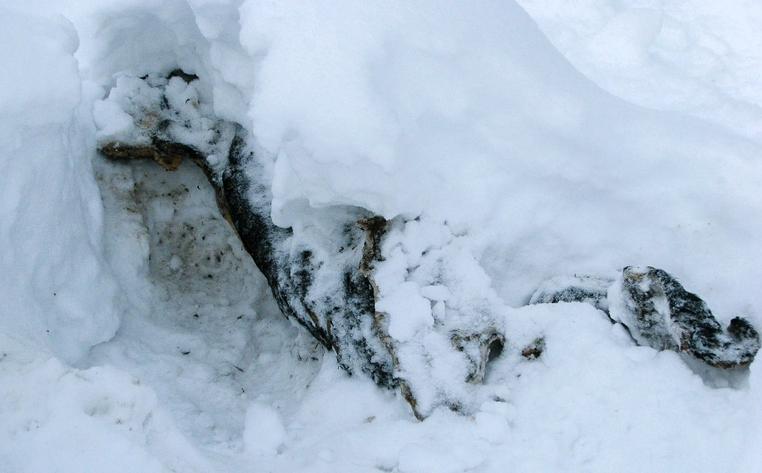 В Кирово-Чепецком районе владелец дома нашел на своем участке тело мужчины.