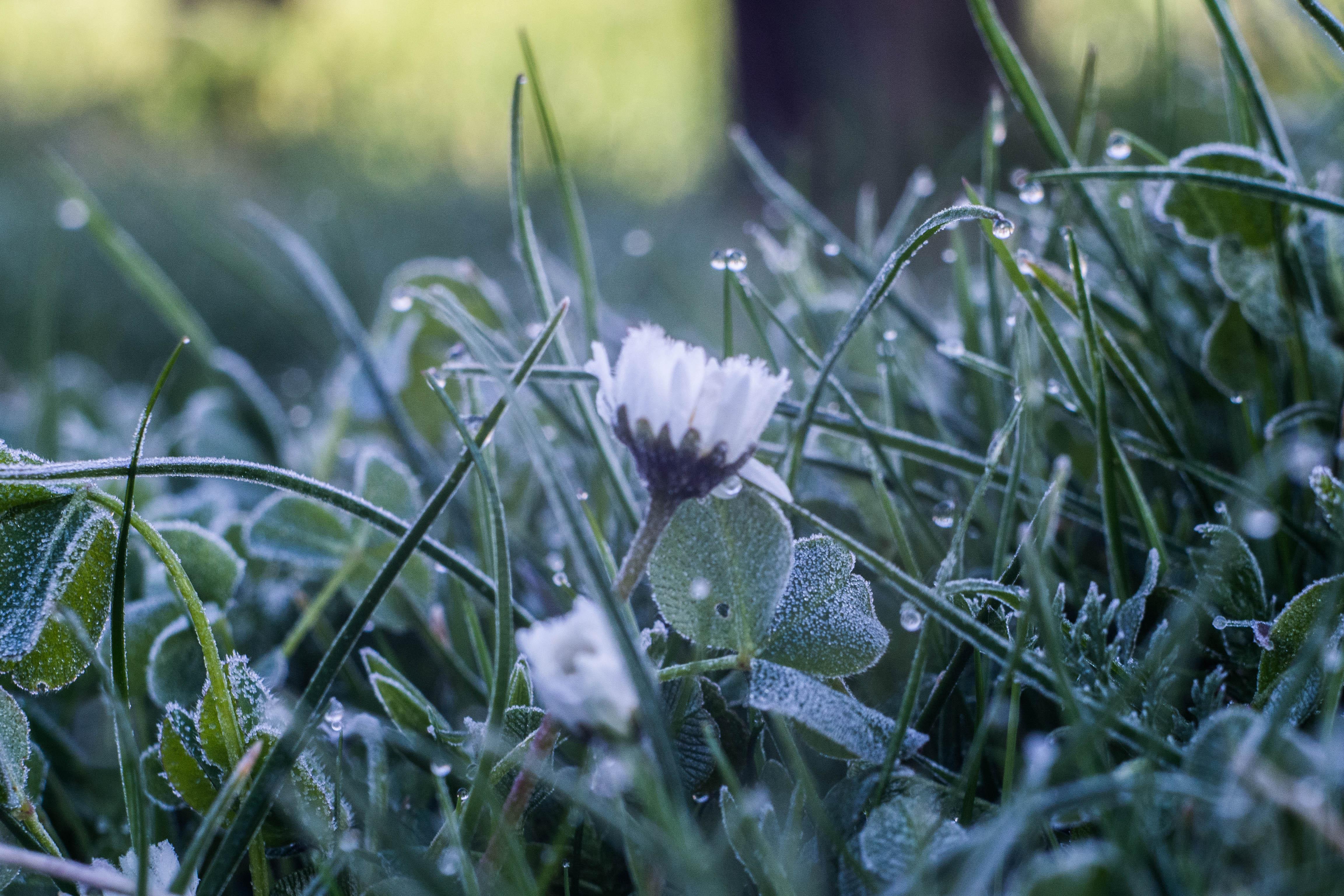 В Кировской области объявлено метеопредупреждение: ожидаются заморозки.
