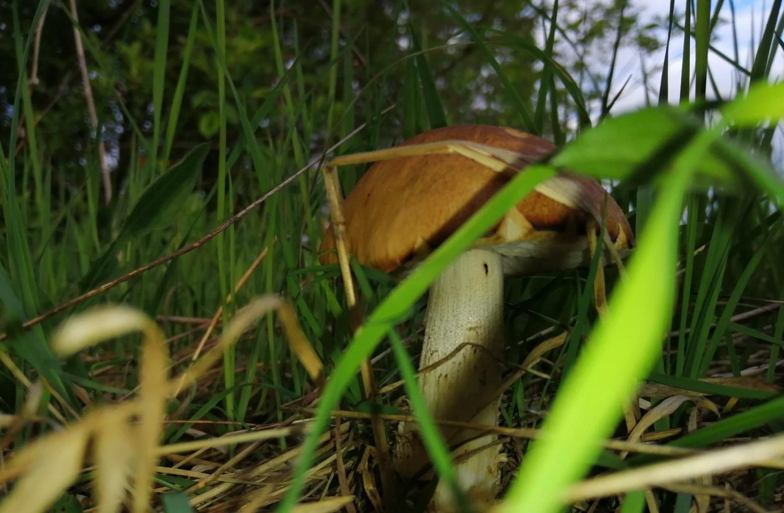 В лесах области появились первые летние грибы.